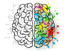 Best Brain Vitamins and Minerals to Increase and Preserve Your Brain Health