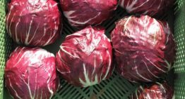 Lettuce Alternatives To Make Your Home-made Salad Infinitely Better